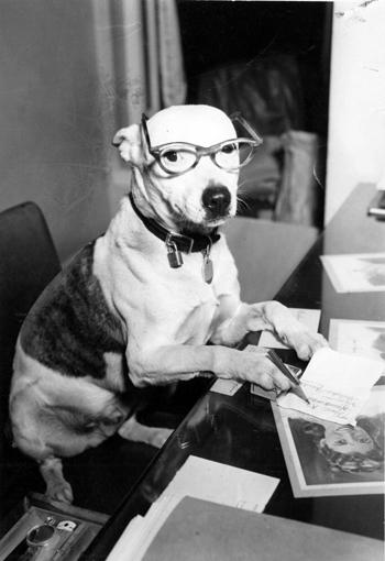 Buddy the Deaf Dog