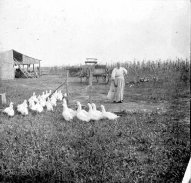 Woman with flock of fowl