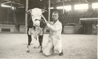 Karl Seested showing a calf at a competition, circa 1935.