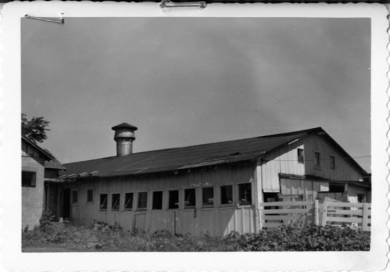 Black and white photographic print, an exterior view of the cow barn at the Wolverine Dairy farm. The light-colored, single story frame building has a row of small windows along the side and three in the gable end. The roof sags and bricks weight down a section at the left. A cylindrical metal vent is at the peak of the roof at the left. A small lean-to is at the right. A gate and fence is at the far right.